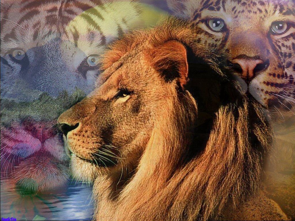 Fonds d ecrans animeaux sauvages page 3 - Photos de lions gratuites ...