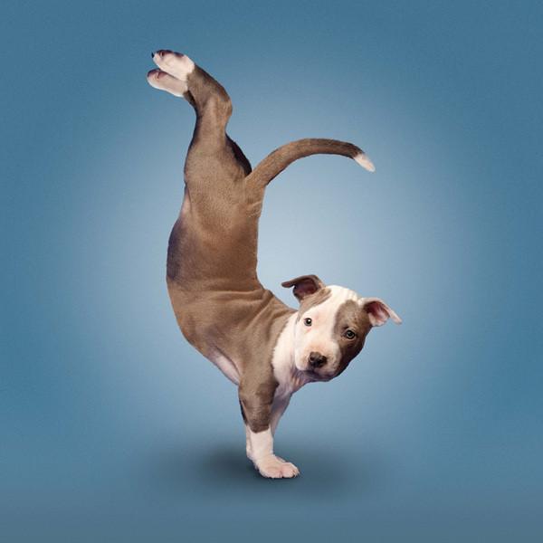 image drole de chien