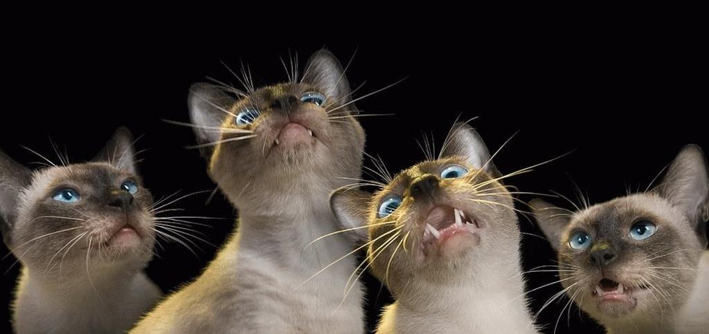 images droles de chats chiens - Page 5