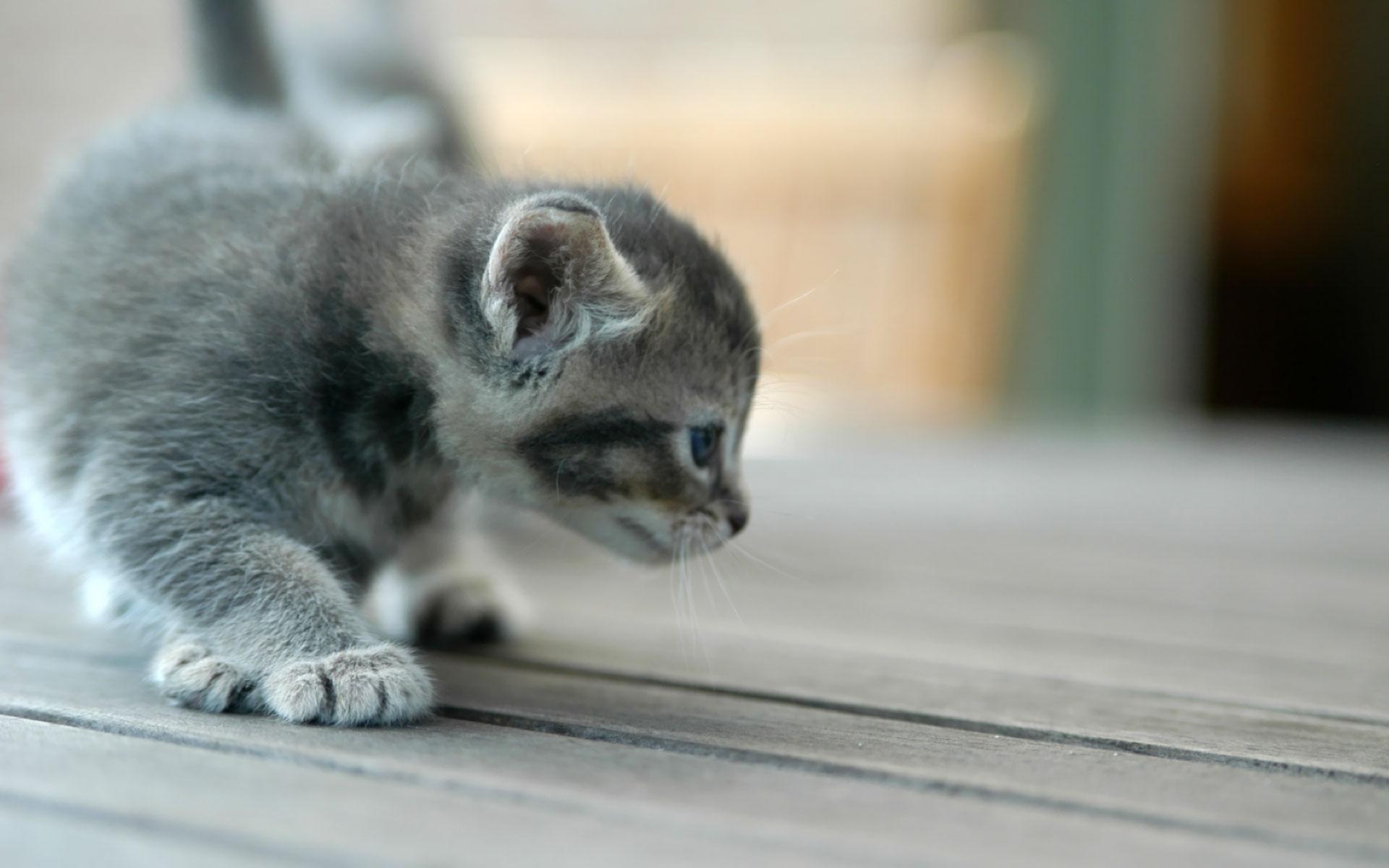 Images fonds d ecrans chiens et chats page 4 - Cute kittens hd wallpaper free download ...