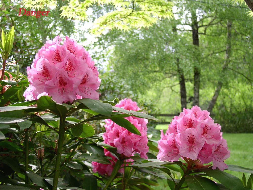 Images fonds d ecrans fleurs page 4 for Plantas perennes exterior